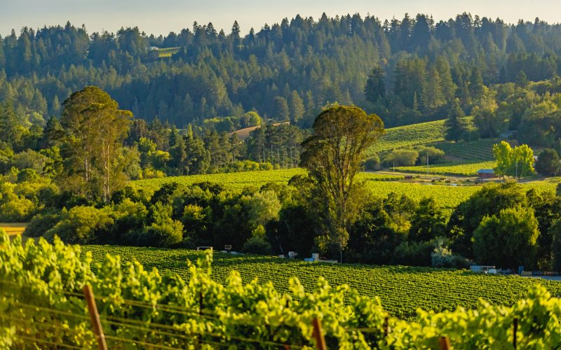 Russian river valley green valley 72ppi 004